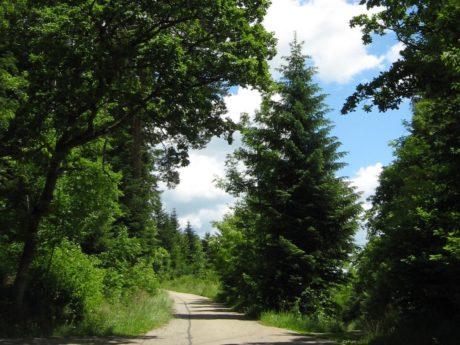Wald 2021