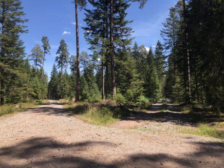 Waldweggabelung