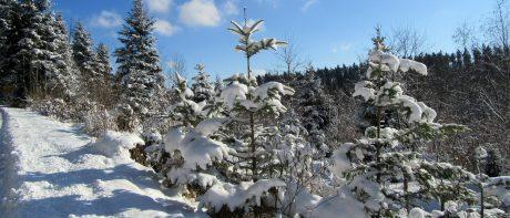 Th Titel Winter